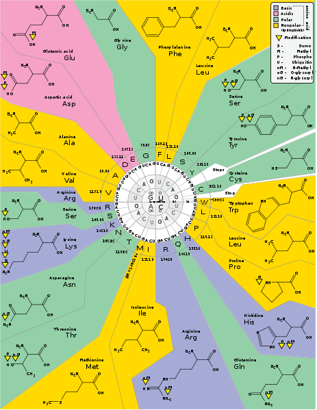 Pin on Design Map Amino Acids on bodily acids, carboxylic acids, common organic acids, haloacetic acids, names of acids, types of acids, natural acids, examples of acids, value of pka table acids, household acids, naming acids, pka values of organic acids,