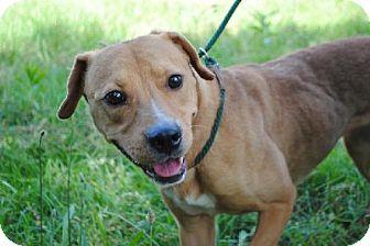 Audrey Urgent Calhoun County Humane Society Inc In Anniston