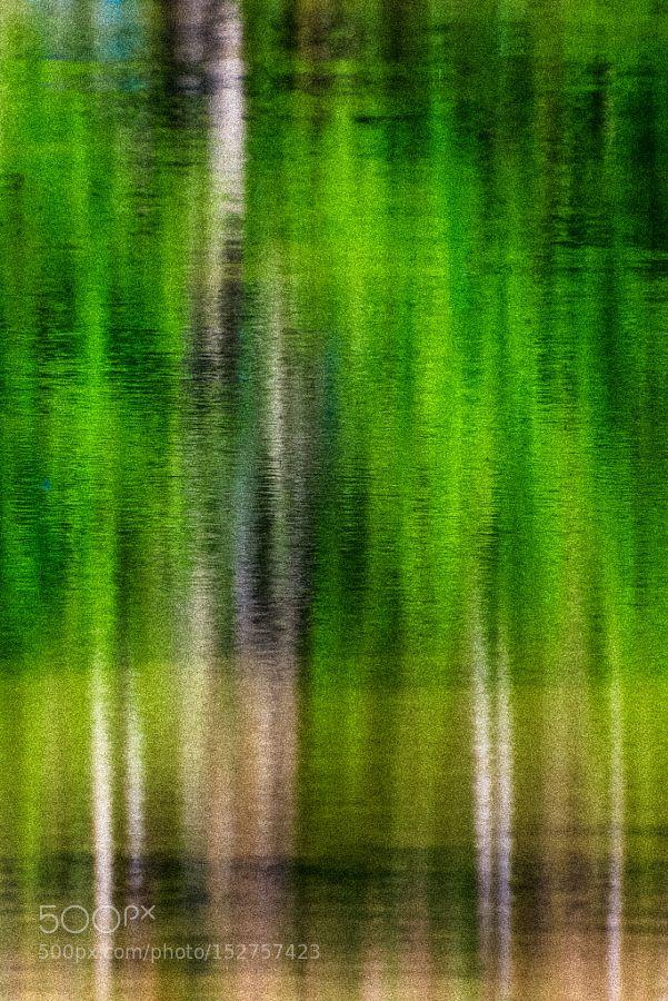 Impression-Spring by zhengdou
