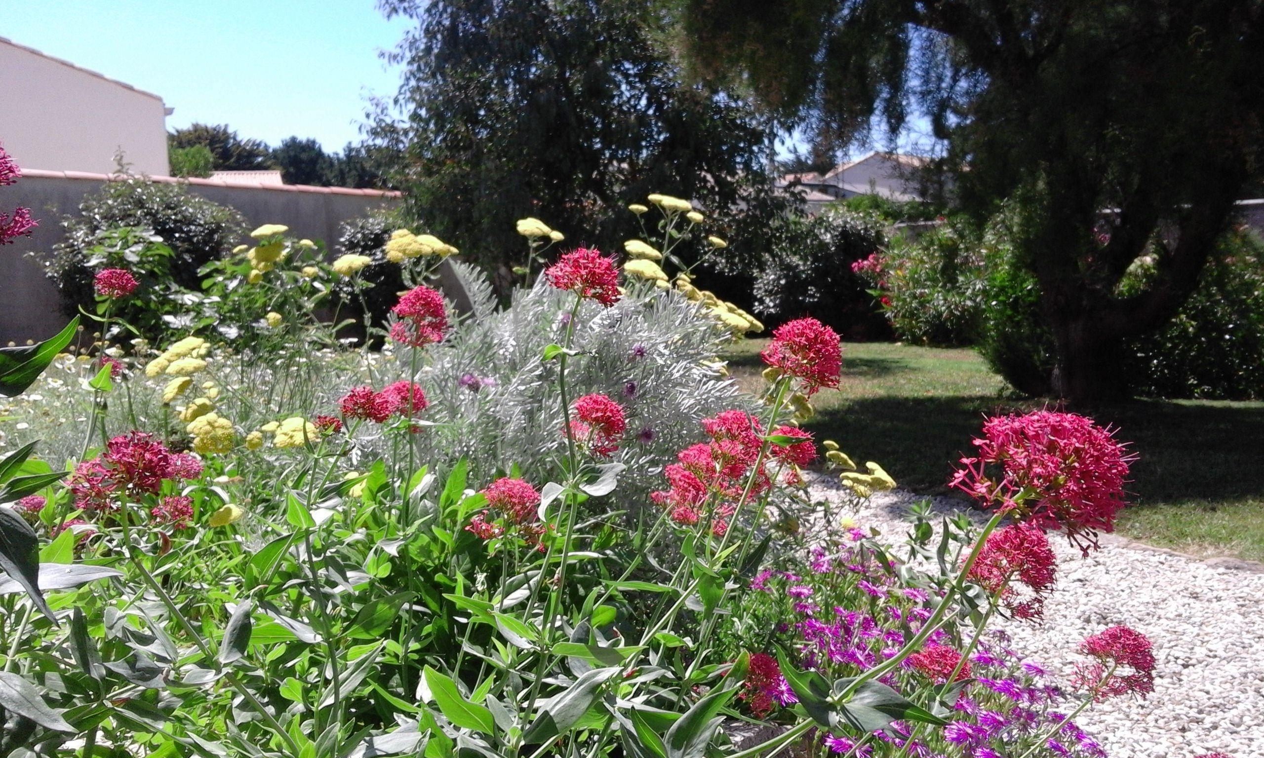 Valérianes achillées 06 2017 Mes jardins Pinterest