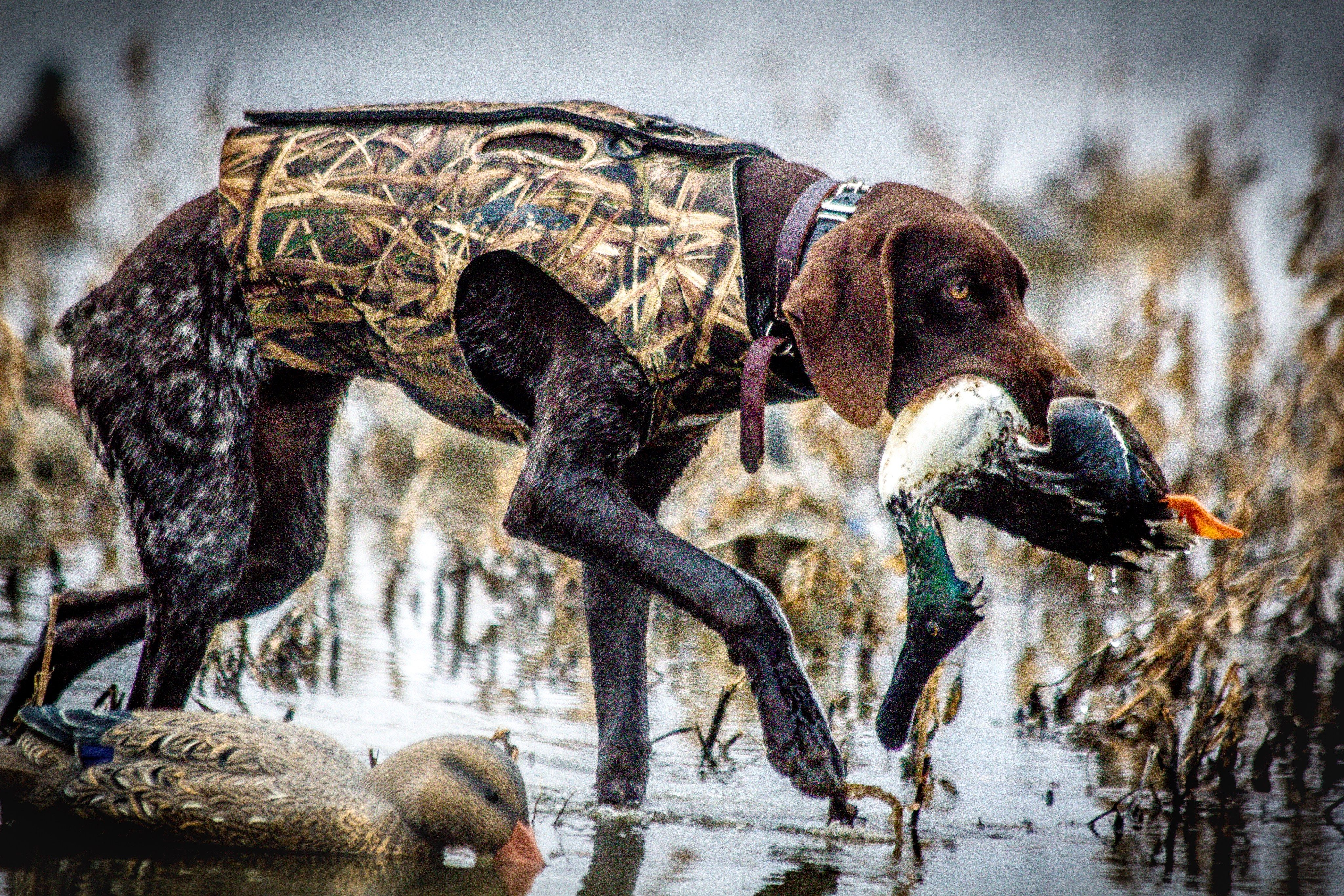 Pin On Bird Hunting