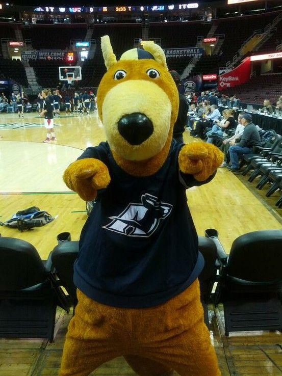 pin by zips athletics on zippy pinterest akron zips and