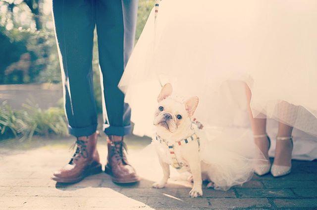 前撮りで一枚 家族でもある愛犬と一緒に写真を残せるのが前撮りのいいところ こだわりの小物も持参してこんなショットも撮ってみては 宮崎市 結婚式 結婚式場 前撮り 足元ショット 愛犬 フレンチブルドッグ フレブル ブヒ トリッカーズ ブーツ タキ