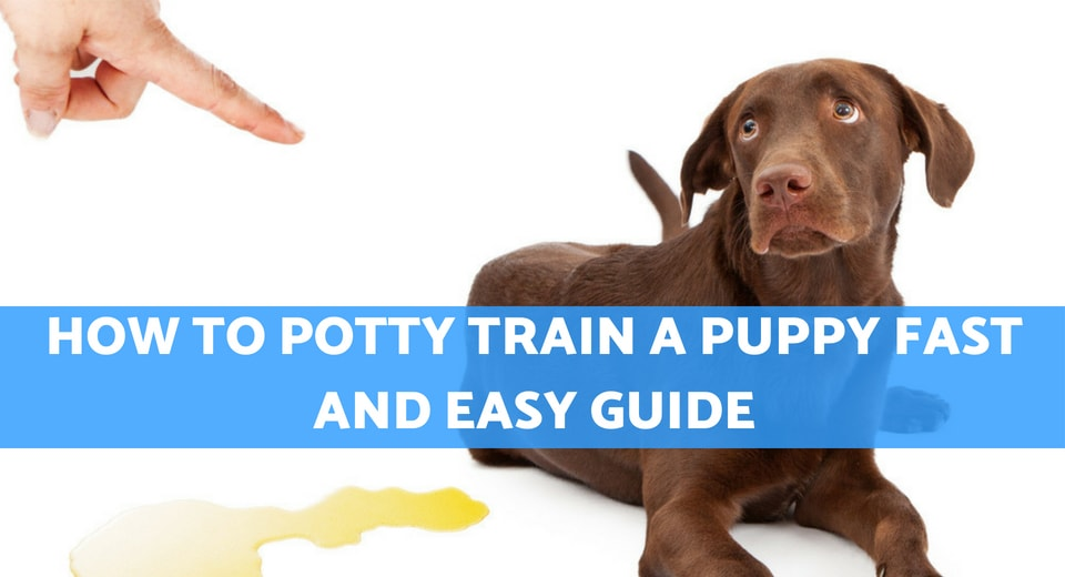 How to Potty Train a Puppy Fast and Easy Guide Puppy