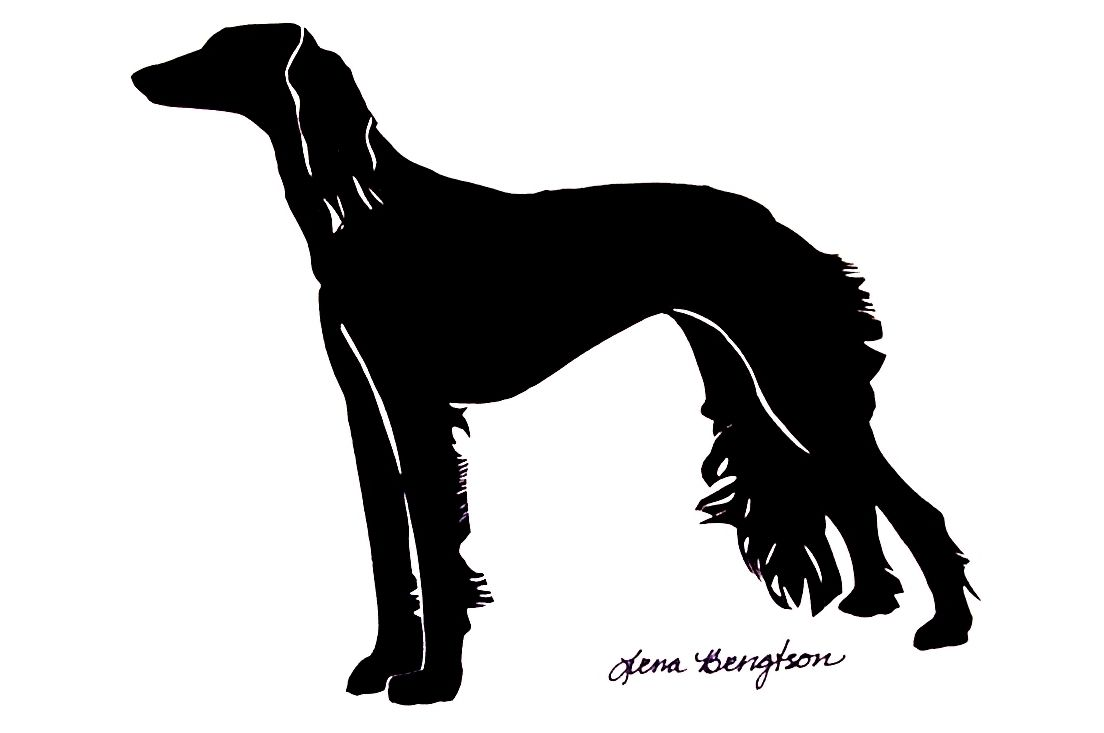 Saluki Silhouette By Lena Bengtson From Hickory Nc Www Silhouettesbylena Com Very Well Executed Afghanen