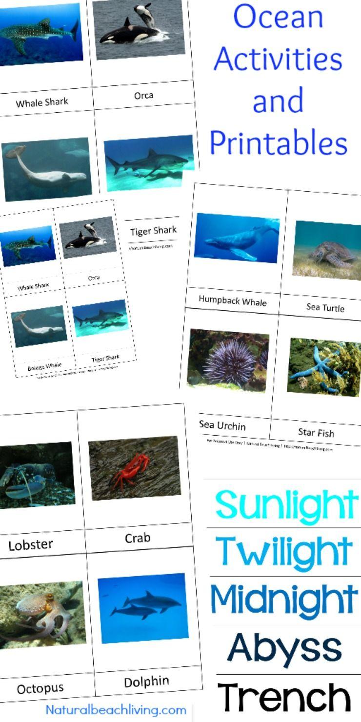 Montessori Theme Ocean Preschool Activities Printables With