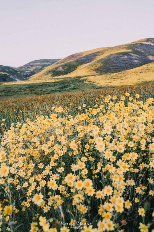 Landscape Photography Fine Art - Photo Contest Winner - Corrizo Plains National Monument Superbloom 2019 by Bessie Young Photography