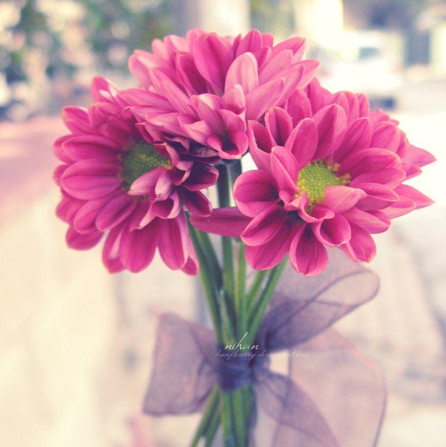 druhy kvetov - Hľadať Googlom
