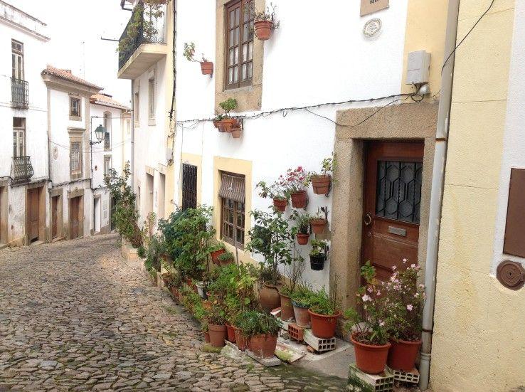Plantas en Castelo de Vide