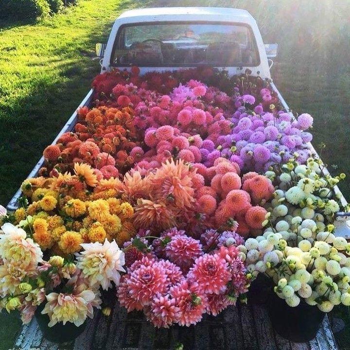 ♡Pinterest:Madelyn1785♡   •PHOTOGRAPHY•   Pinterest   Blumen