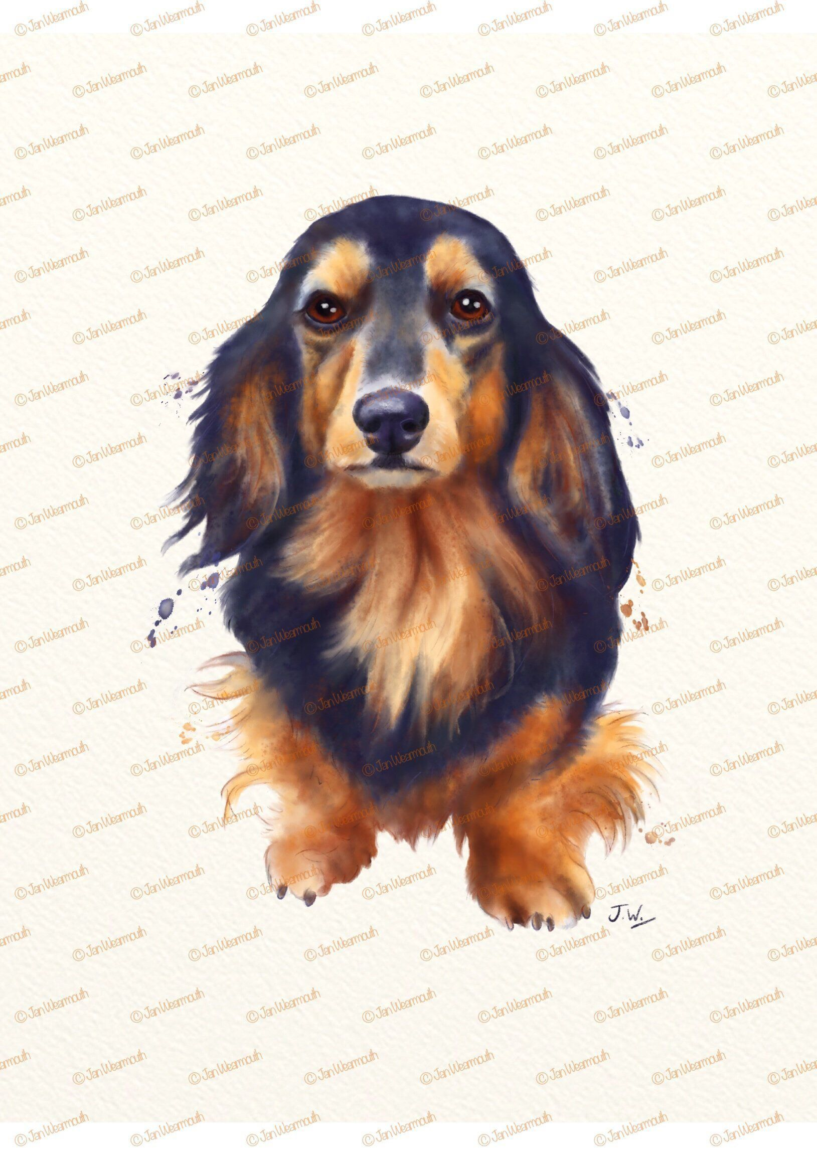 Dog Clipart Watercolor Clipart Digital Download Dachshund Clipart