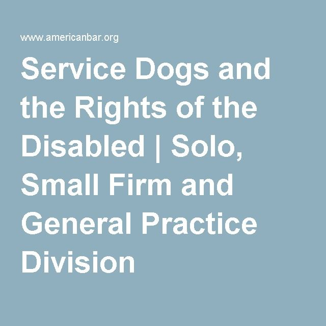 Service Dogs And The Rights Of The Disabled Solo Small Firm And
