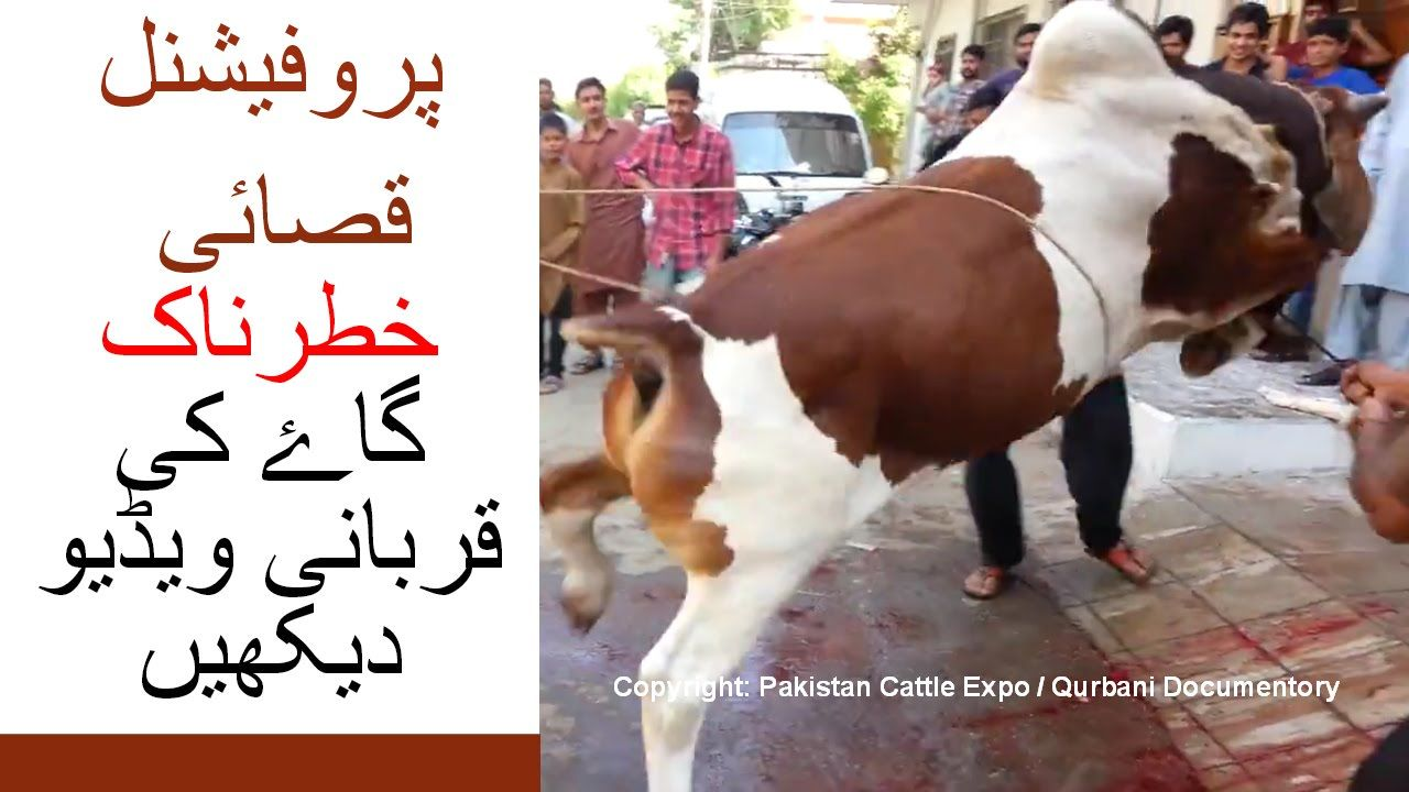 This cow meat will be very delicious to eat During Bakrid