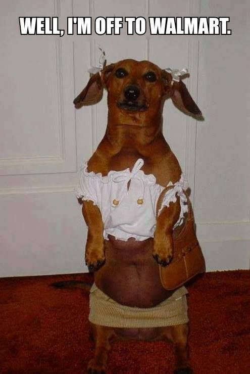Well I M Off To Wal Mart Weiner Dog Dachshund Funny Cute Haha