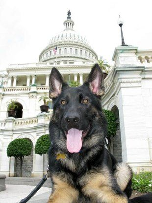 Dog Friendly Vacations And Sight Seeing In Washington Dc