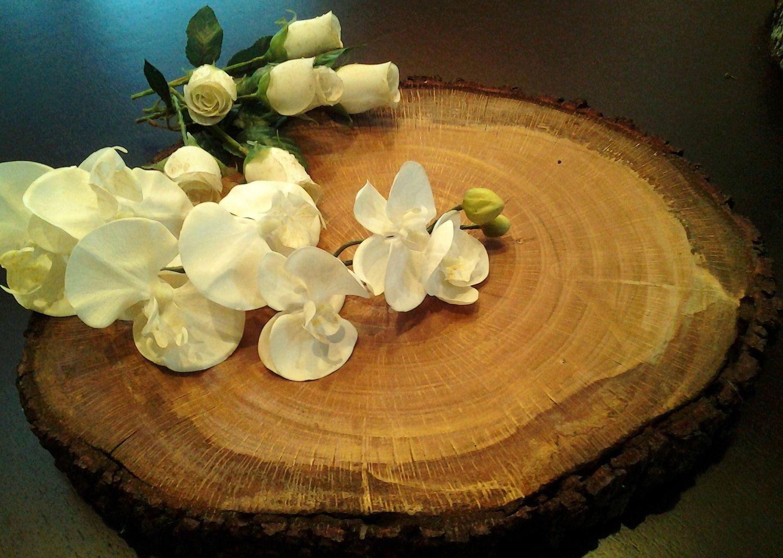 "EXTRA LARGE Beautiful Oak Tree trunk slice 19"" x 161/2"