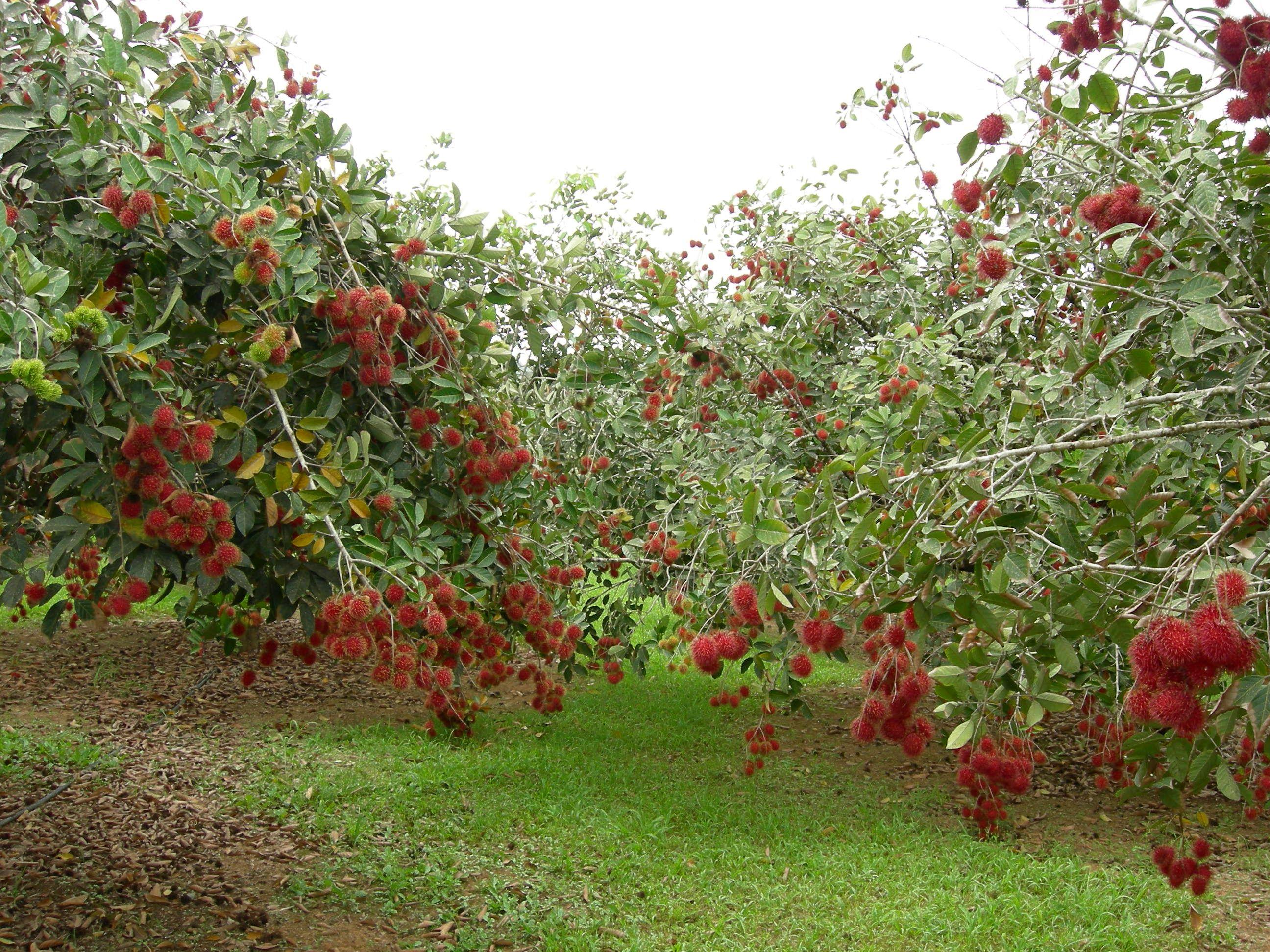 Pin on Fruits /frutas