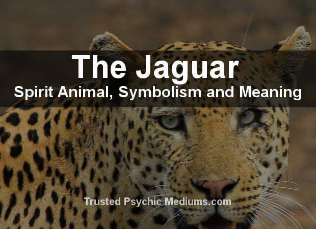 The Black Jaguar Spirit Animal A Complete Guide Cat Spirit Animal Black Jaguar Animal Spirit Animal