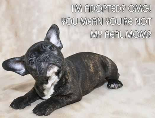 Pin by Kayla 🐶🙉 on Cute pup French bulldog, Cute dogs