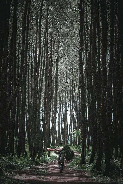 Petani Dan Hutan Pinus Di Garut Di 2020 Pemandangan Hutan Villa