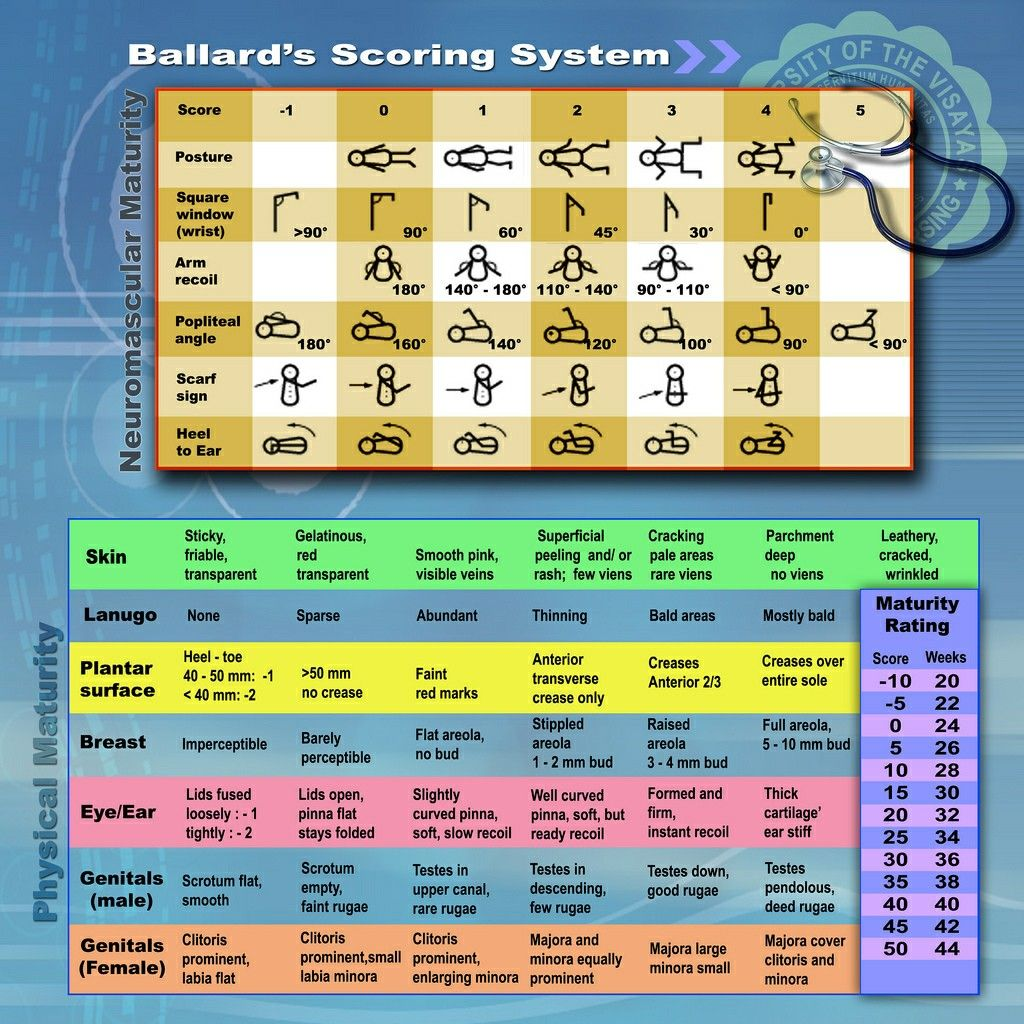 the ballard maturational assessment, ballard score, or ballard scale