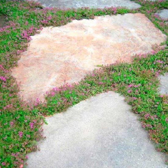 Photo of 15 Amazing Garden Path Ideas   Balcony Garden Web