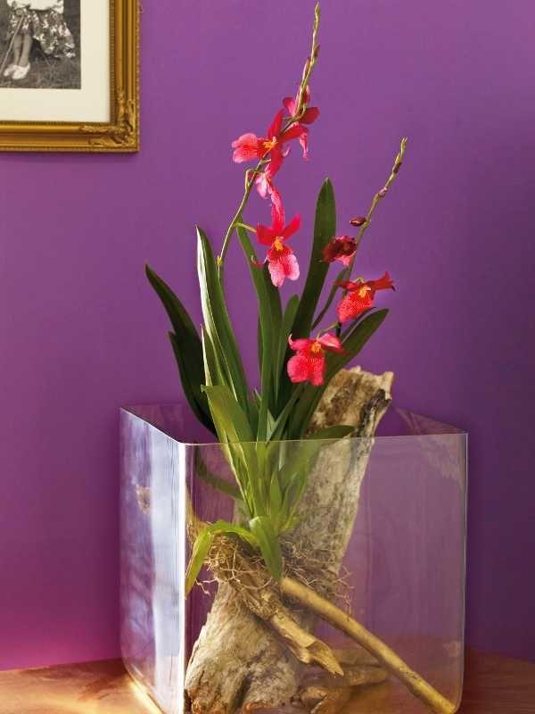 Zauberhafte Orchideen   Orchideen Schaukasten H1