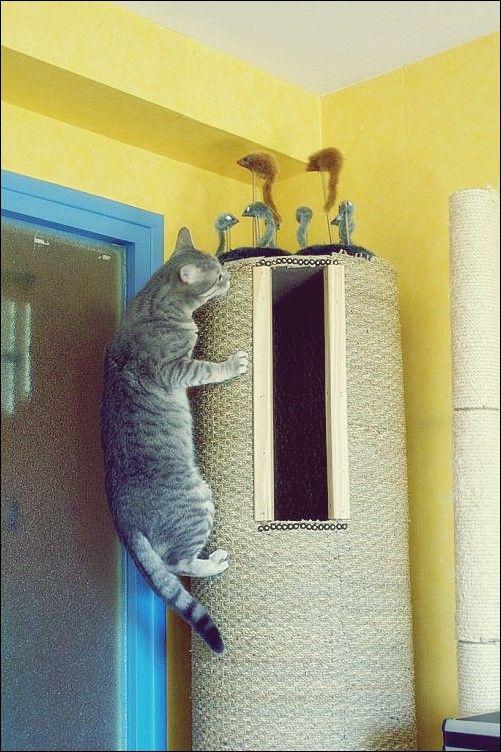 Hausgemachte Katzenpfosten, Bäume und Häuser Katzen