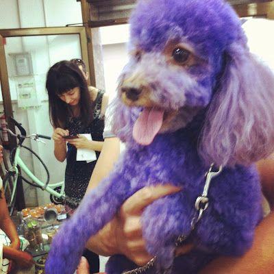 Luke in purple