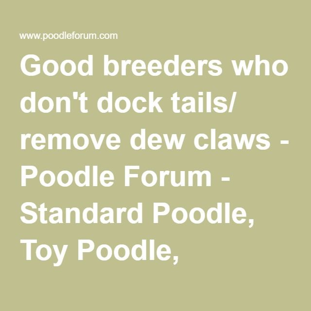 Good Breeders Who Don T Dock Tails Remove Dew Claws Poodle