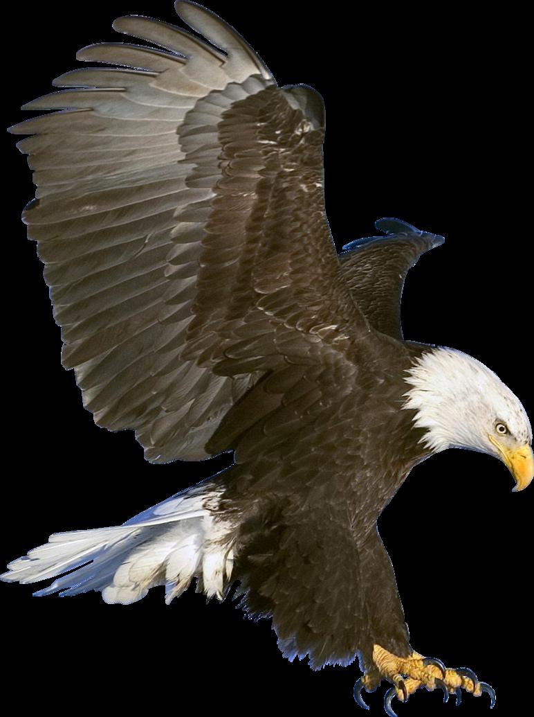 Eagle In Flight Render By Bobhertley On Deviantart Types Of Eagles Eagles Bald Eagle