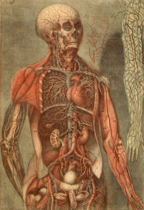 Anatomy Of The Parts Of A Man And Woman By Artist Jacques Fabien