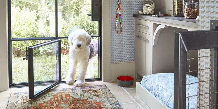 This Is The Dog Room Of Every Pet Owner's Dreams Dog