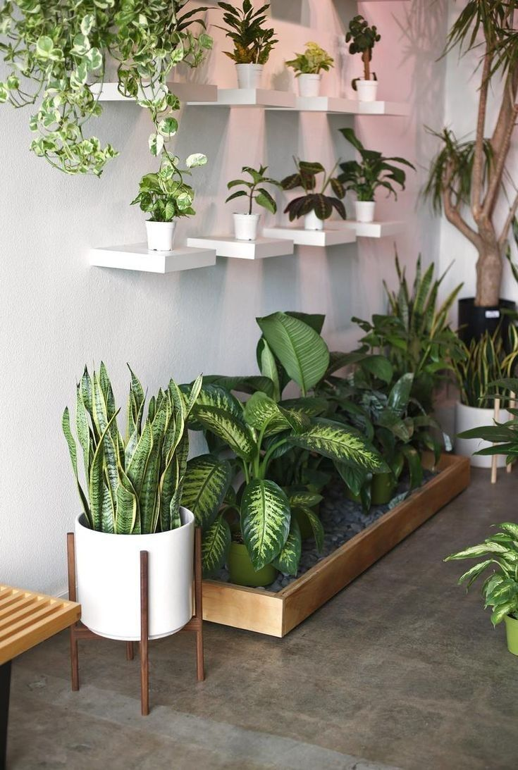 Pin By Beautiful Mexican Gifts Handm On Jardin In 2020 Plant Decor Indoor House Plants Indoor House Plants Decor