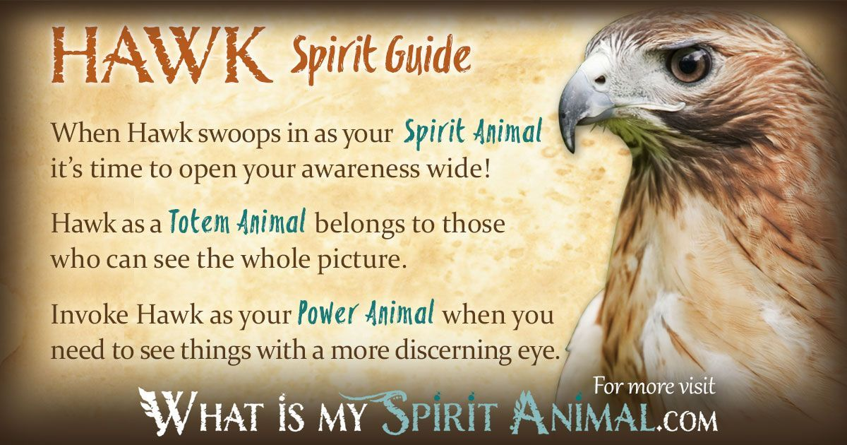 Hawk Symbolism Meaning Witches Pinterest Power Animal