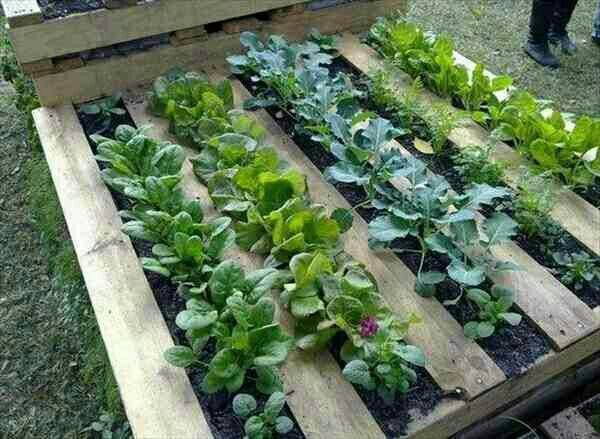 Great way to reuse an old pallet.
