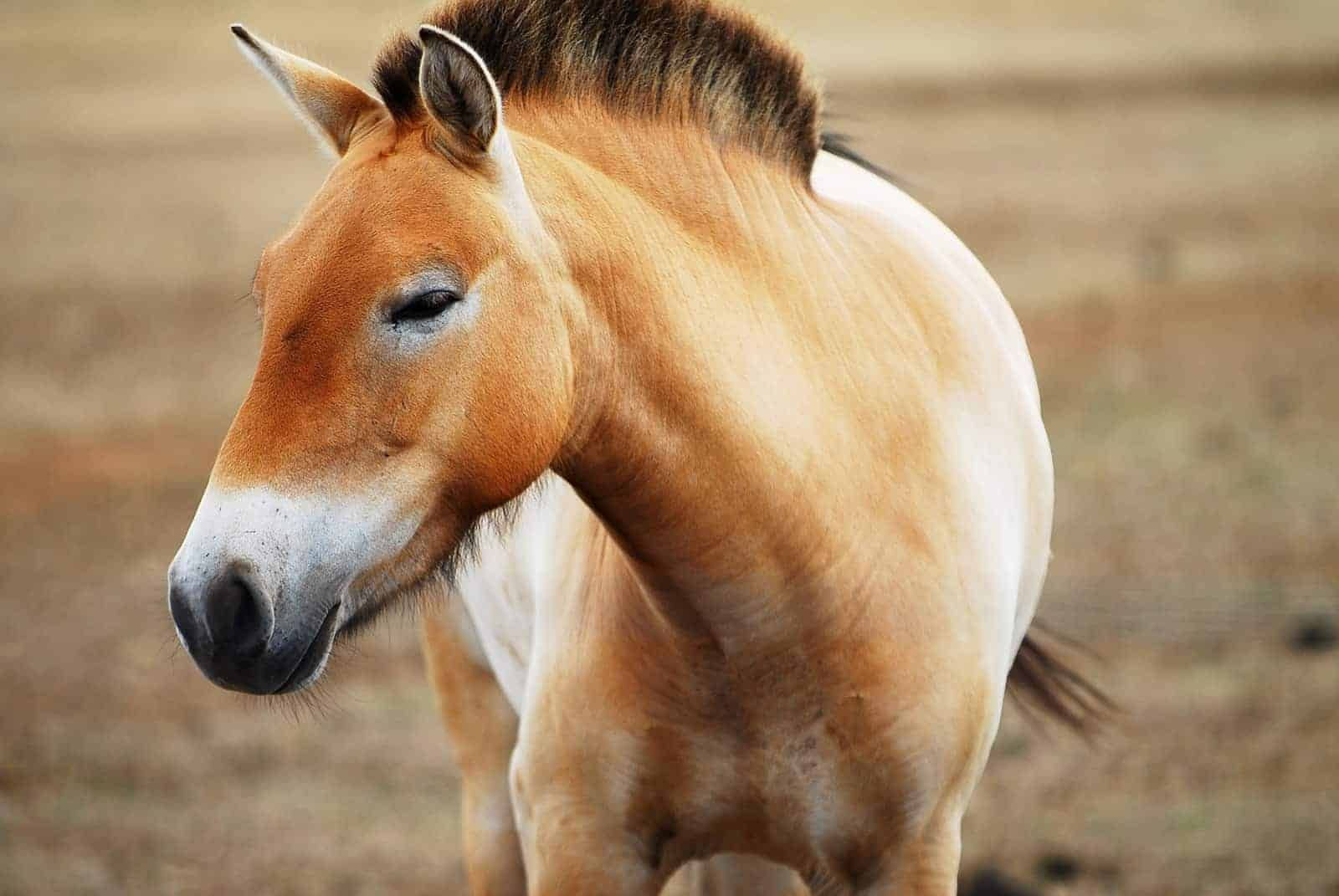 8 most unusual horse breeds Equestrian Palace Unusual