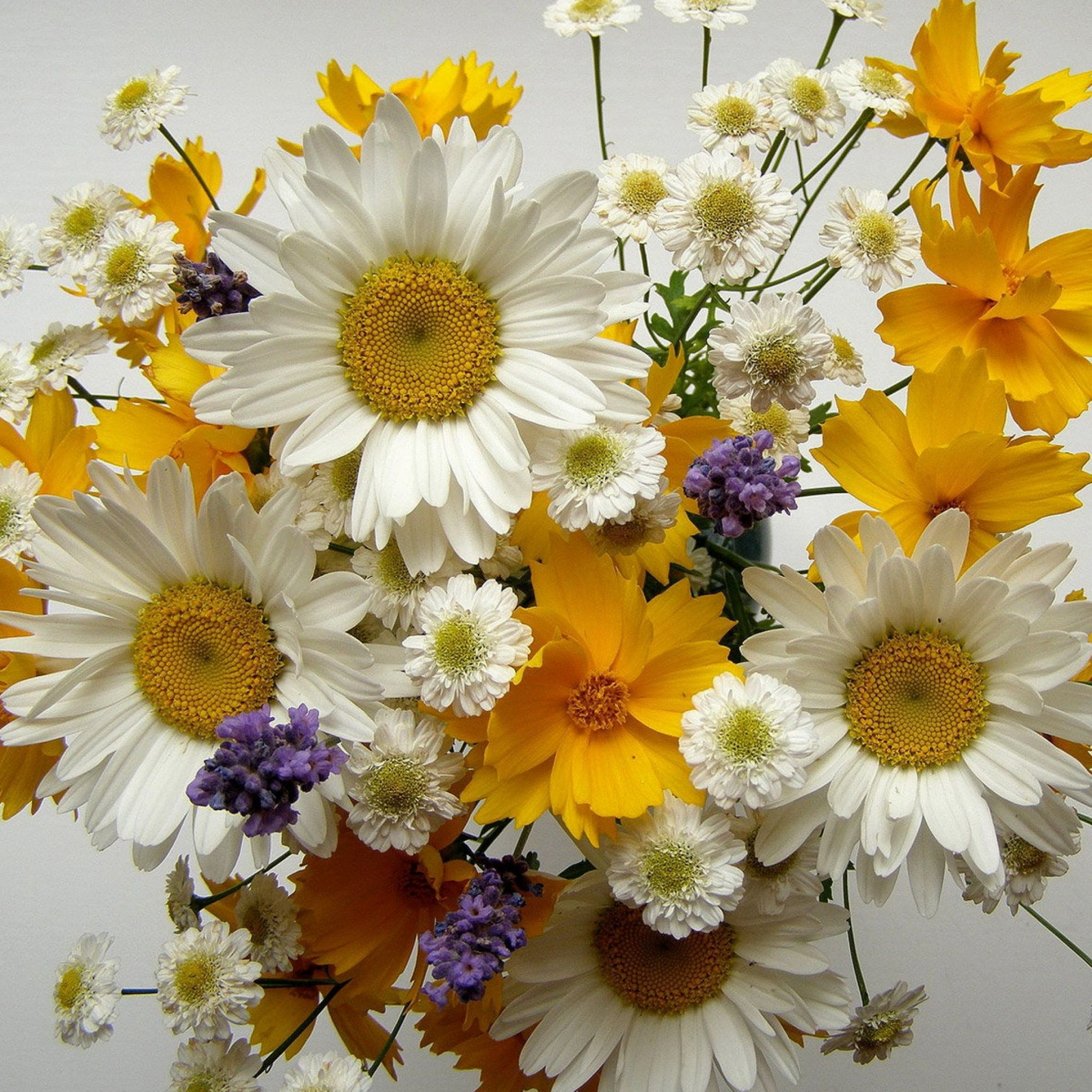 chamomile-big-small-flowers-bouquets-composition-2048x2048.jpg (2048 ...