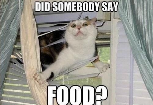 Food kitty