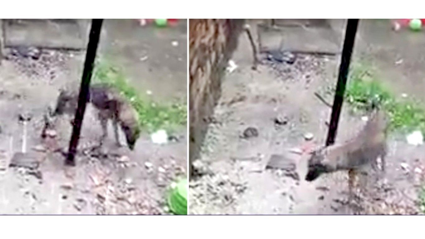 Justice for pet dog tied to a pole in the cold rain for