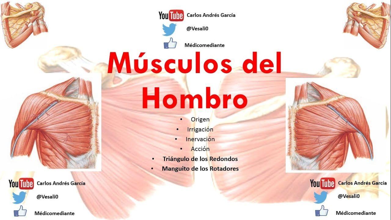 Anatomía - Músculos del Hombro (Origen, Inserción, Acción ...