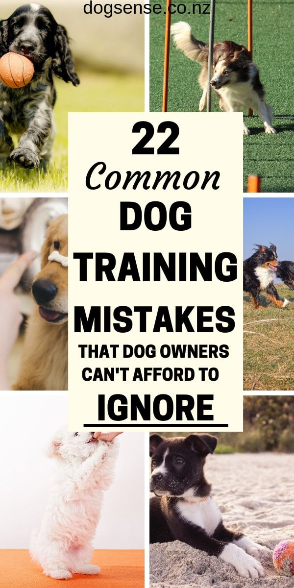 22 Common Dog Training Mistakes Why You Need To Stop Them Now