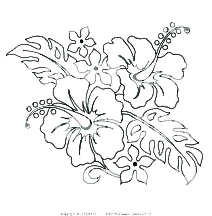 Hawaiian Flowers Coloring Pages Flower Coloring Page Flowers Pages Flower Coloring Pages Flower Drawing Hawaiian Flower Drawing