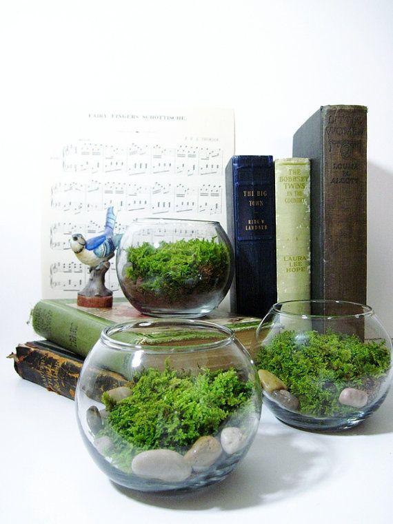 Terrariums and books.