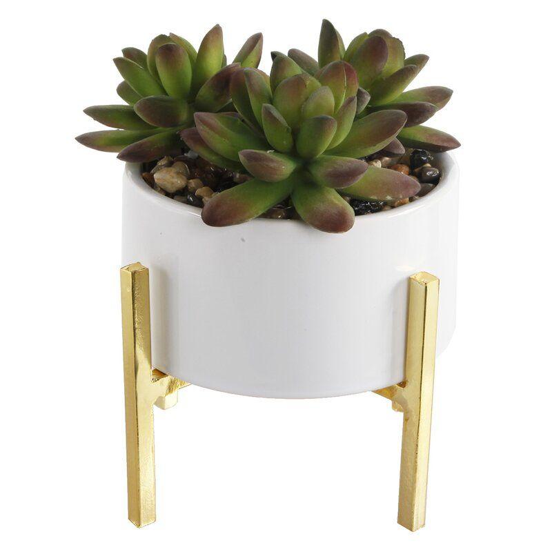Mix Stand Desktop Succulent Plant In Pot In 2020 Planting Succulents Potted Trees Succulents