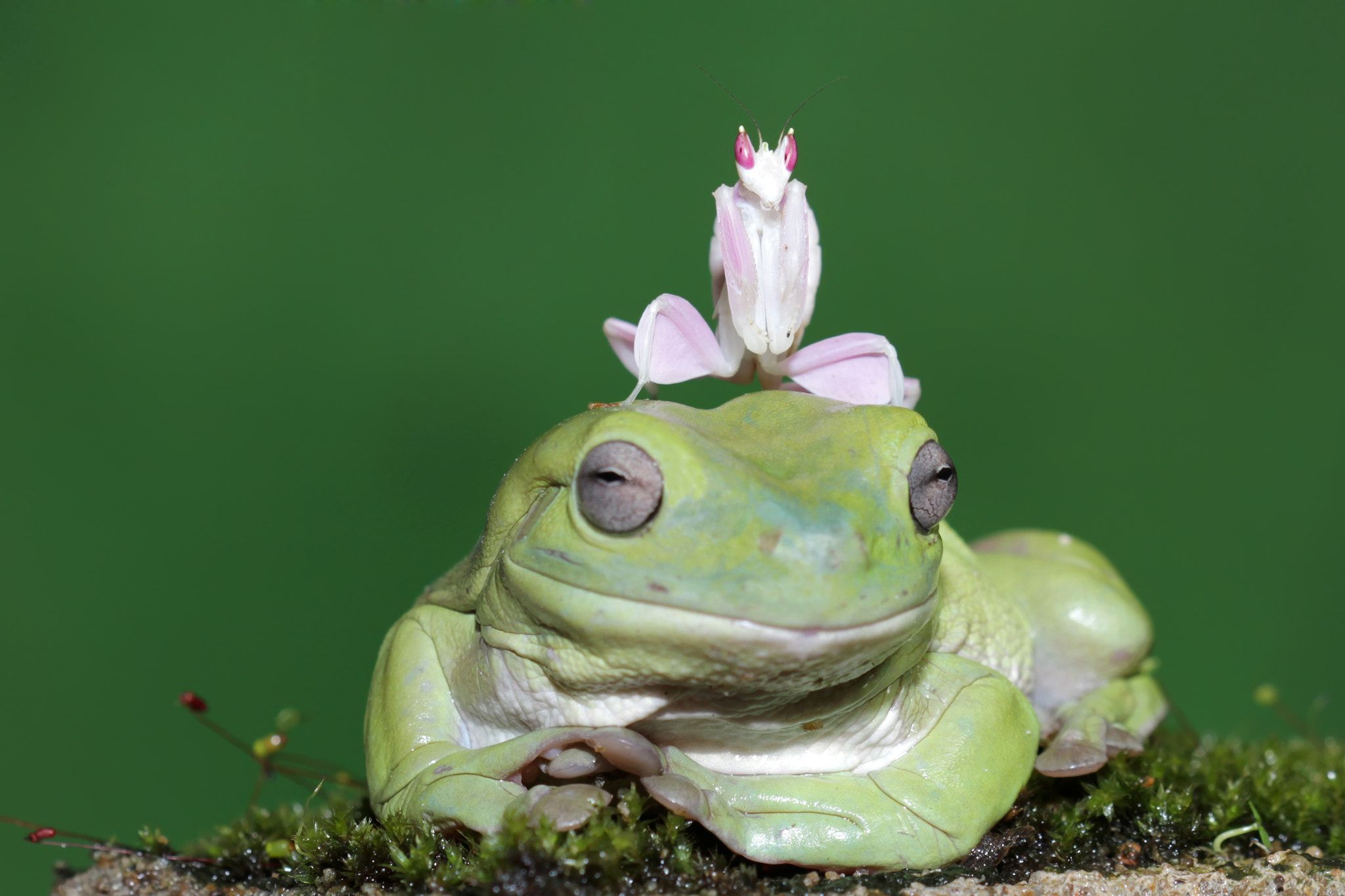 Frog And Matis Face Null Frog Cute Frogs Frog Illustration