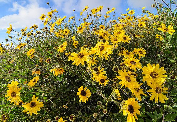 Drought Resistant Plant List California Native Plants