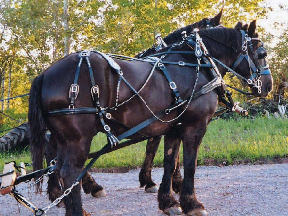 Harness, Collars and Sleigh Bells for Sale | Hansen Wheel and ...