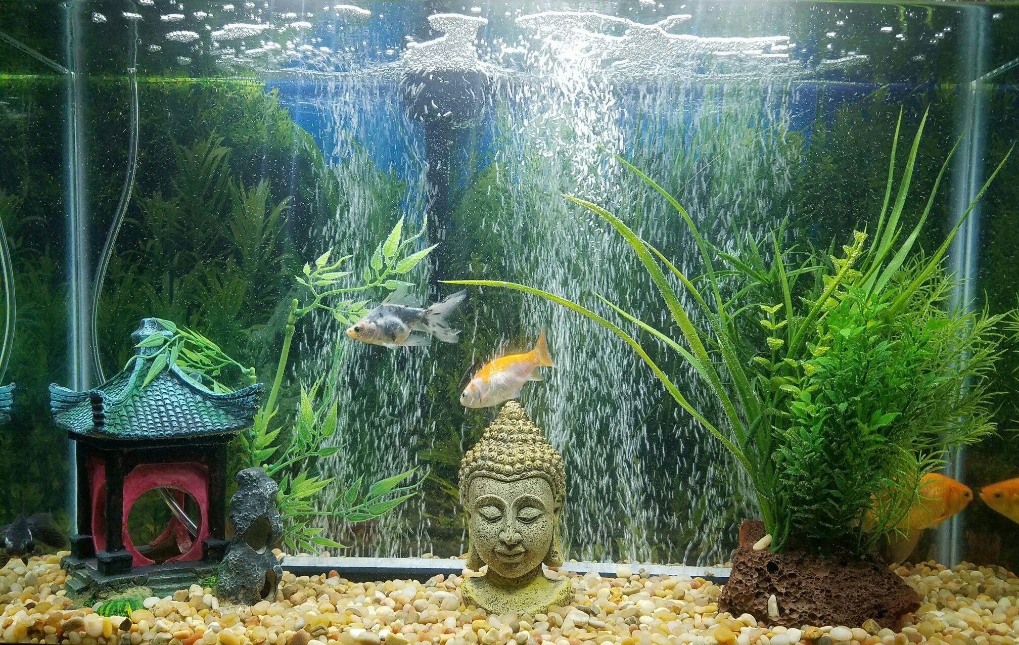 Buddha fish tank