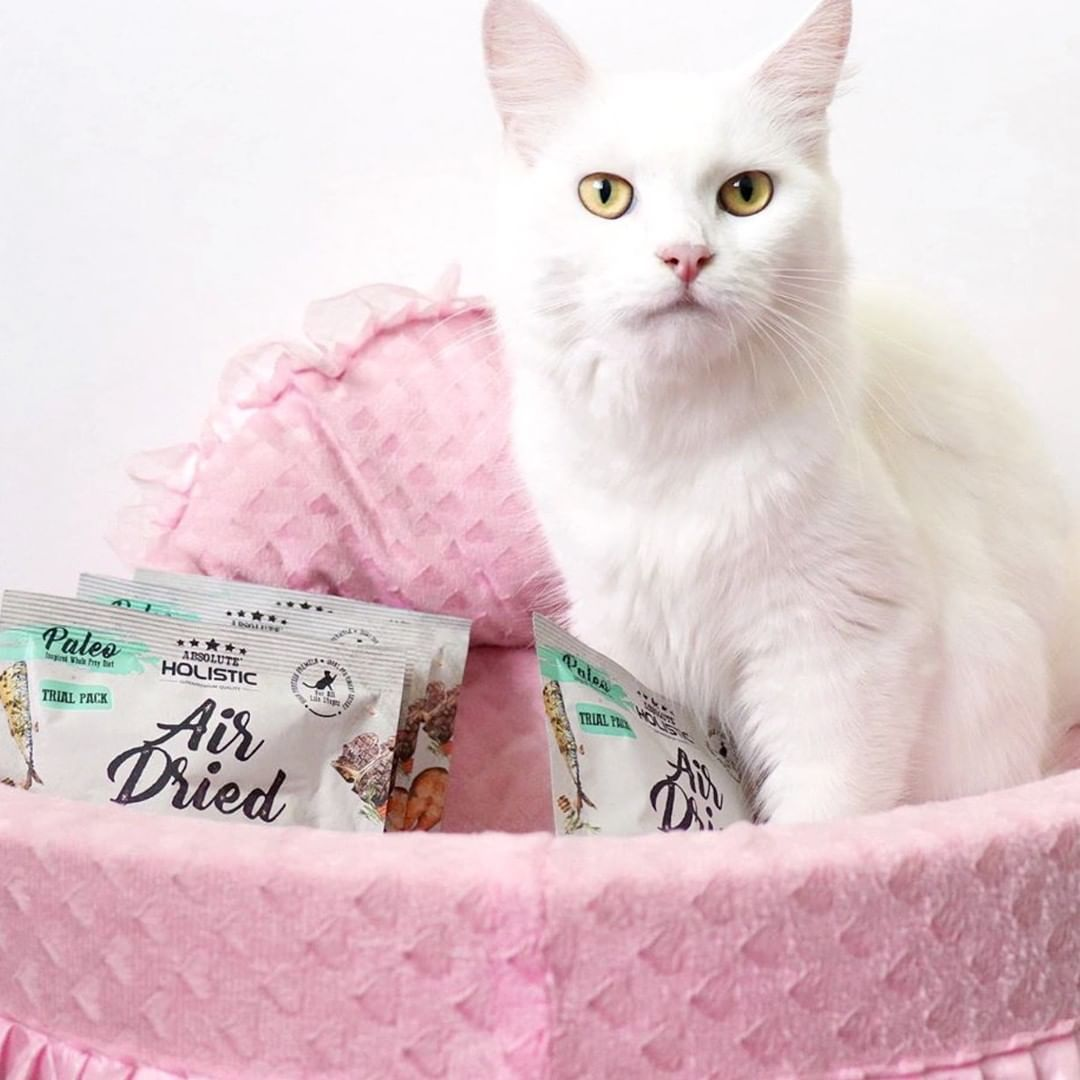 Princess Lacy Enjoys Her Air Dried Treats From Absolute Holistic So Much That She Would Steal The Packets From The Pantry And Stash The Cat Food Cats Animals